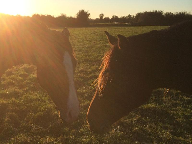 horses-mystery